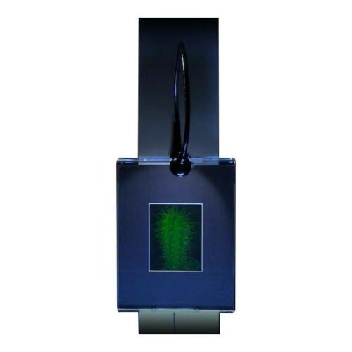 3d cactus hologram picture lighted wall mount